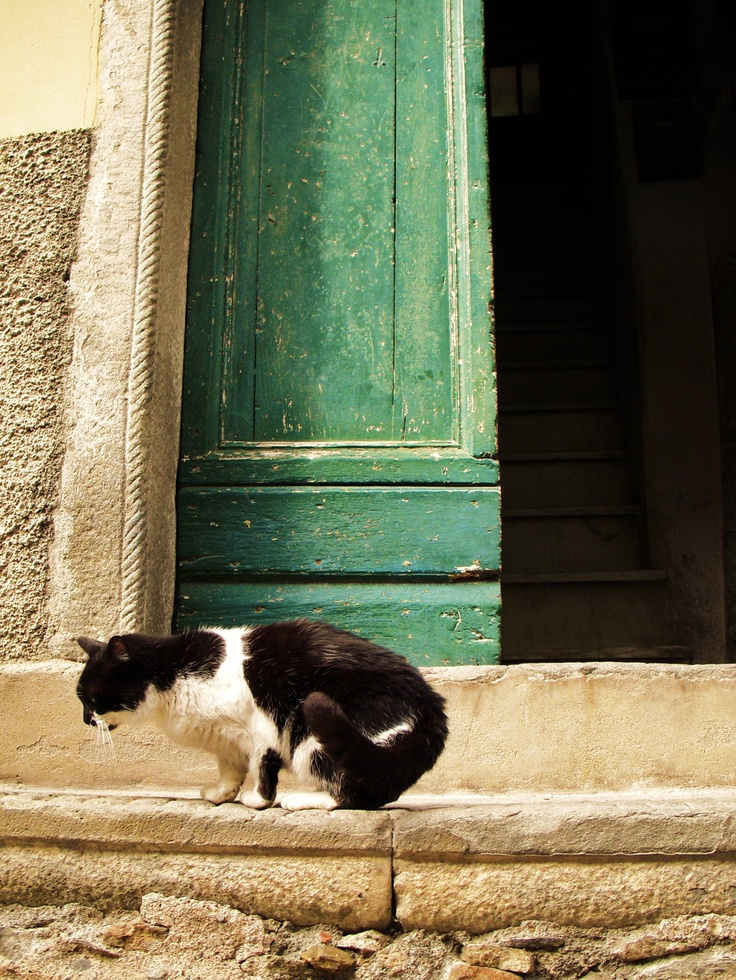 Stray cat, Cinque Terre Italy