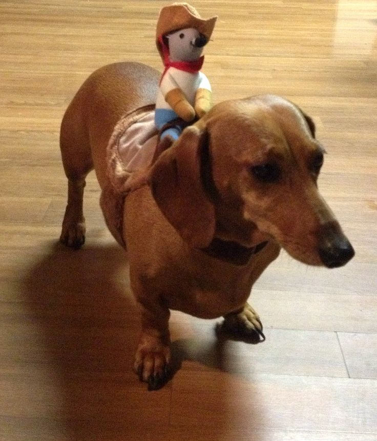 Guy Dressed As His Dogs Favorite Toy For Halloween