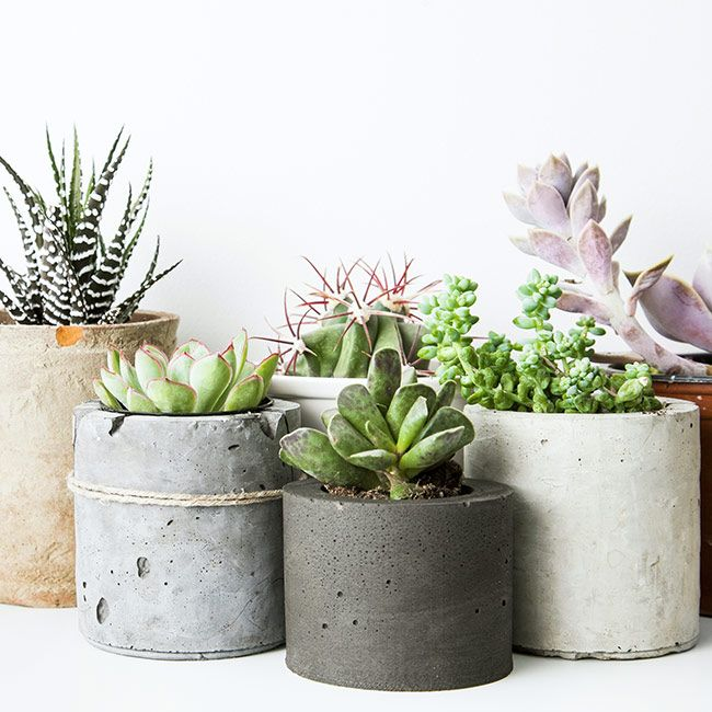Stunning Low Maintenance Indoor Plants Contemporary   Interior .