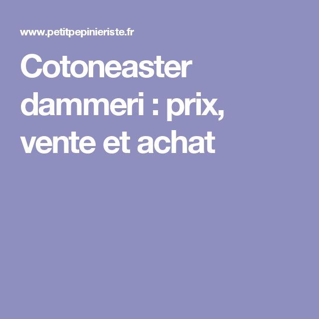 Cotoneaster dammeri : prix, vente et achat