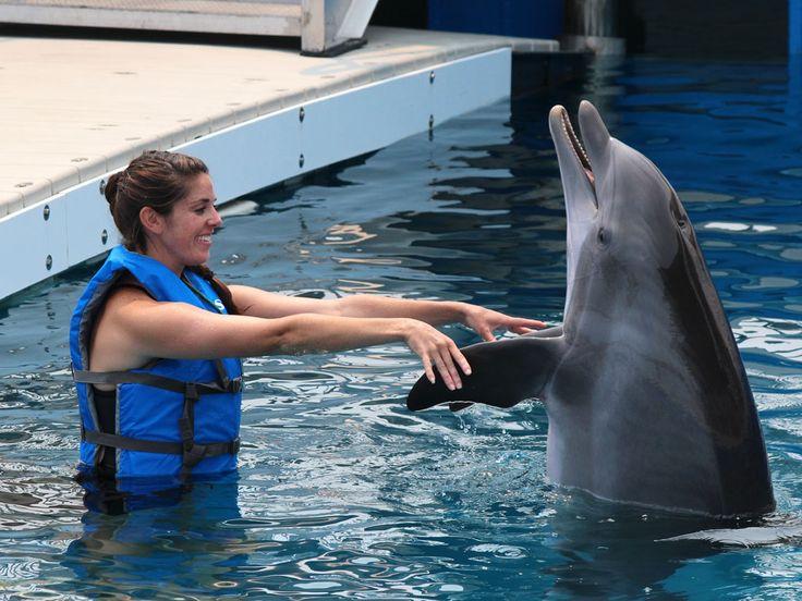Gulfarium Marine Adventure Park : Destin: Discover Florida's Emerald Coast : TravelChannel.com