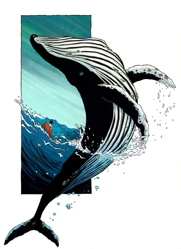 Whale by RachelCurtis.deviantart.com on @deviantART