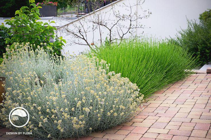 Krásna rozkvitnutá záhrada s kvetmi a zeleňou