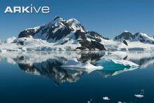 Small icebergs in Esperanza Bay, Antarctica