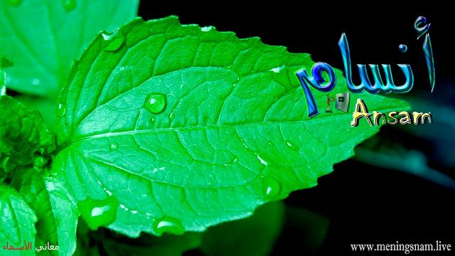 معنى اسم انسام وصفات حاملة هذا الاسم Ansam Plant Leaves Plants