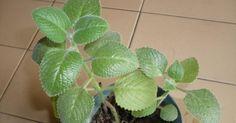 Cómo utilizar fósforos para mejorar el aspecto de las plantas