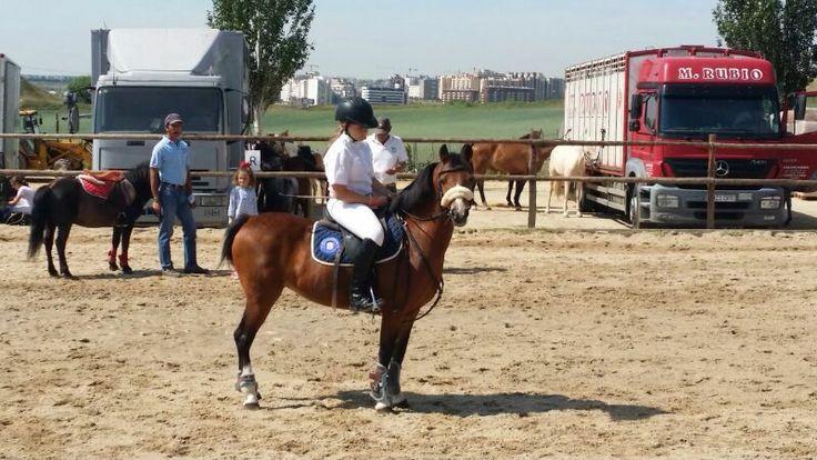La Pony Cindy de la propiedad Yeguada Las Agrupadas, concursó el fin de semana pasado en el Concurso Nacional de Saltos con Ponis del Pony Club de la Moraleja en la prueba de Ponis B2, como preparatorio al XXVI CAMPEONATO DE ESPAÑA DE PONIS 2014, que se disputará los días 27, 28 y 29 de junio en Segovia.