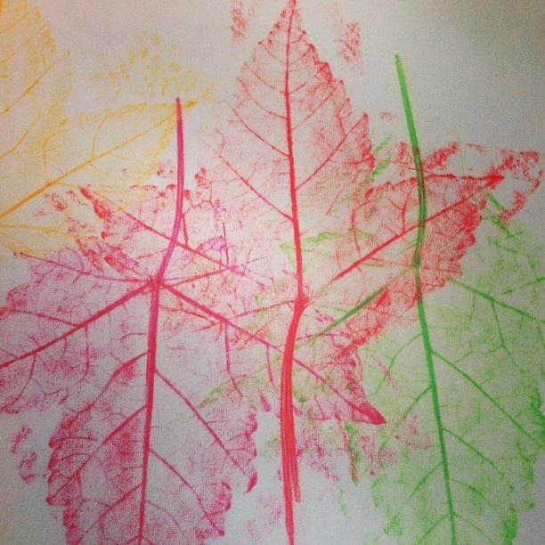 Botanik undervisning  - @signewenneberg-