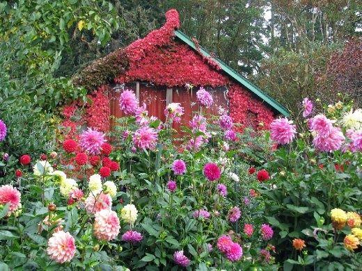 marvelous garden sheds victoria bc - Garden Sheds Victoria Bc