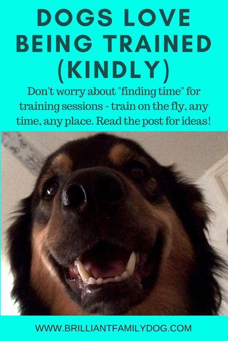 Witty Simulated Dog Training Online Save Money Dog Training Dog