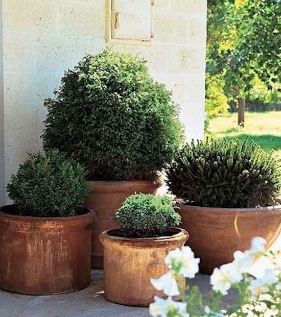 Container Gardening with Potted Shrubs | OMG Lifestyle Blog