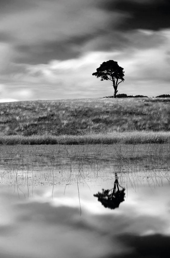 Ansel Adams..(?)  doesn't look like A.A to me. .. but I like it