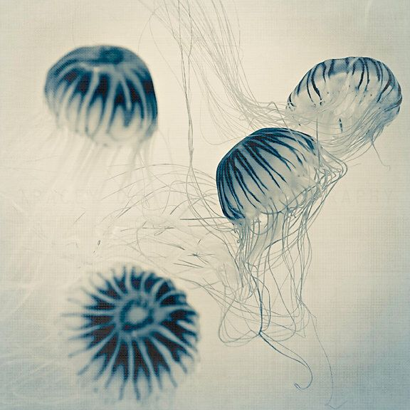 Blue Jellyfish Print, Indigo Nature Photography, Ocean Art Print -blue jellyfish decor, jellyfish photograph, ocean wall by TraceyCapone on Etsy https://www.etsy.com/listing/123620845/blue-jellyfish-print-indigo-nature