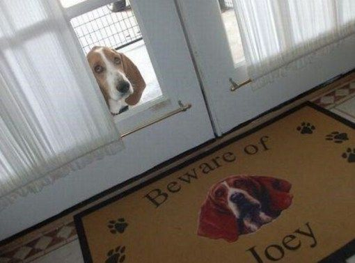 "25 Most Dangerous Dogs Behind ""Beware Of Dog"" Signs"
