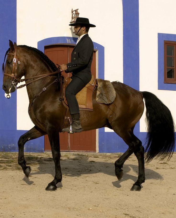 Lusitano | Portuguese Horse | #Portugal #Porto
