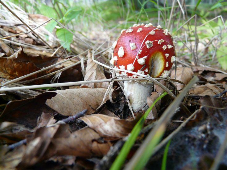 Nature in Šumava :3 ;)