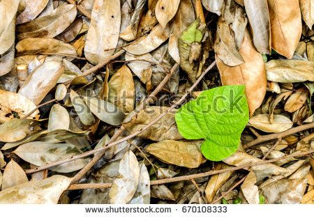 save environment day concept. green leaves are among the dead leaves. over light