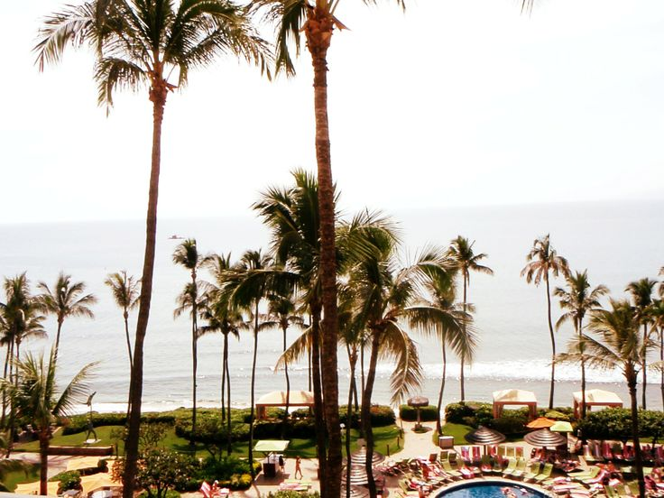 Maui Palm Trees & Ocean