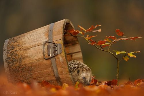 This Hedgehog | 36 Reasons That Fall Is The BEST