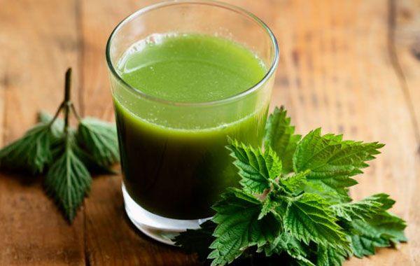 Jak zrobić sok z pokrzywy i jak zakonserwować by zachował właściwości
