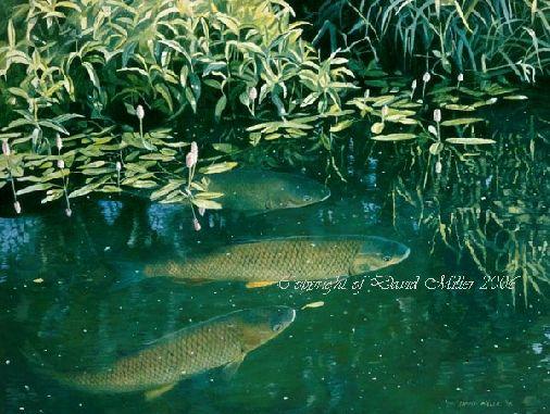 Chub & Bistort by David Miller open edition print £44.00