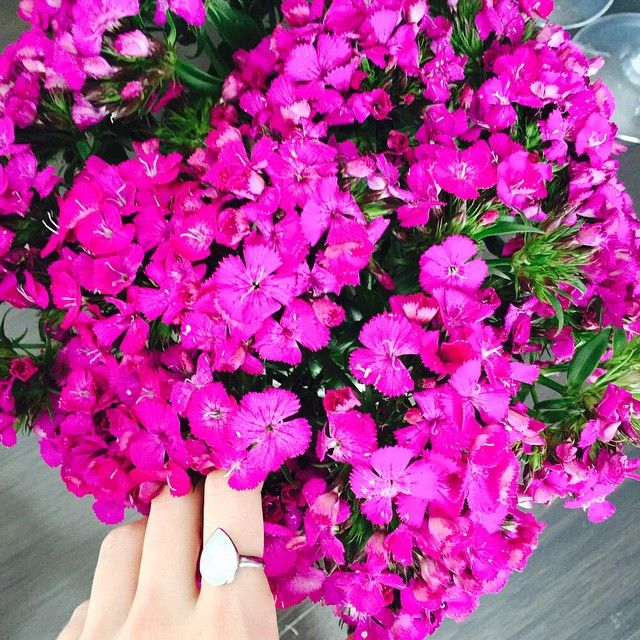 Market day blooms ~  #eaglefarm #blooms #fuchsia #sunday #bling #chrysoliteopal