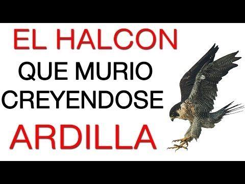 Superacion Personal y Motivacion en Español Videos 1