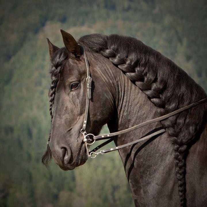 50 mejores imágenes de horse braids en pinterest | caballos