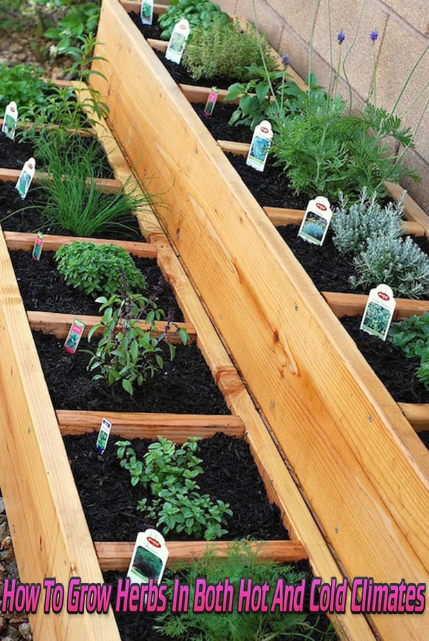 How To Grow Herbs In Both Hot And Cold Climates