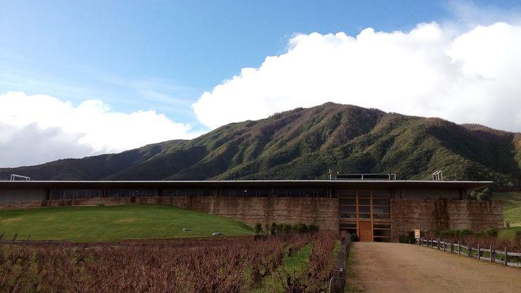 #vinaMontes #apalta Santa cruz, #rutadelvino #tour y degustación de vino, #sexta región, #Chile