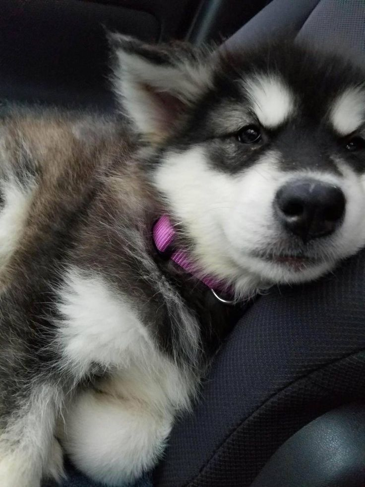 #puppies #cute #pupper #canines – BarkStory – Dog Photo