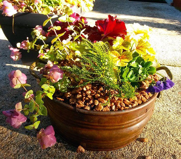 """composition bacs-""""Les Jardins des Hurlevents """" http://www.plantes-vivaces-hurlevents.com/"""