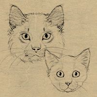 How to Draw Animals: Cats and Their Anatomy (via vector.tutsplus.com)