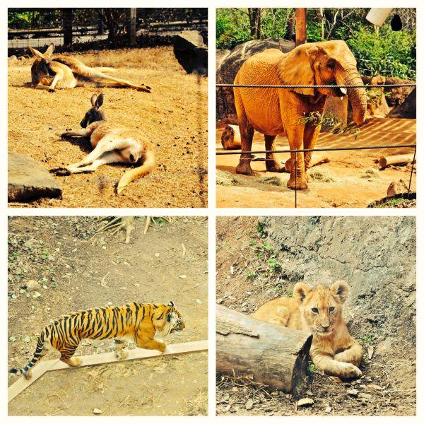 A visit to Zoo Atlanta!