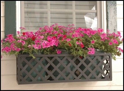 Idea for window boxes.. this one is Iron lattice, but don't you think as long as you had a good frame it could be done with plastic lattice?