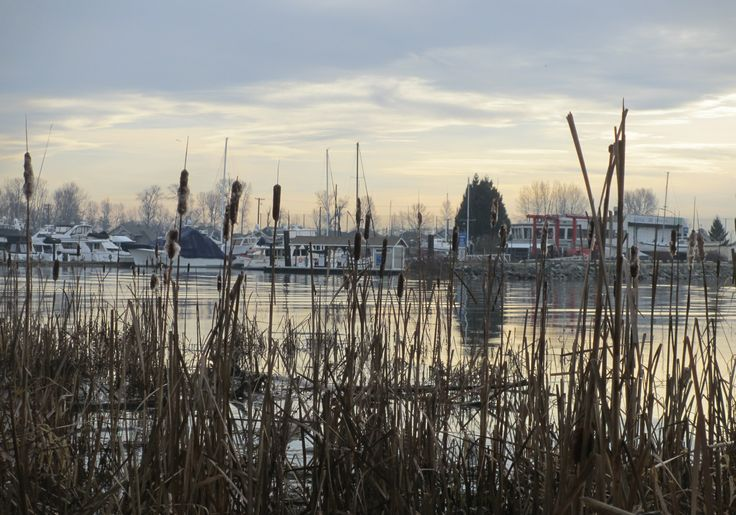 Of Cattails and Wetlands