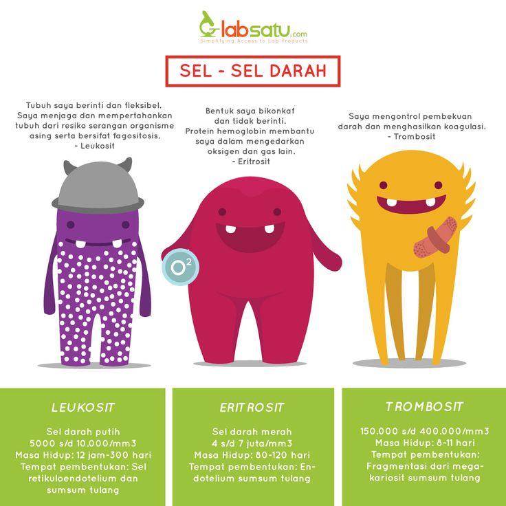 Kenalan dengan sel darah yuk.. :) #infografik #LabSatu #seldarah  Ingin tahu keunikan fakta tentang darah? Simak: https://www.labsatu.com/news/detail/223/5_fakta_menarik_tentang_darah
