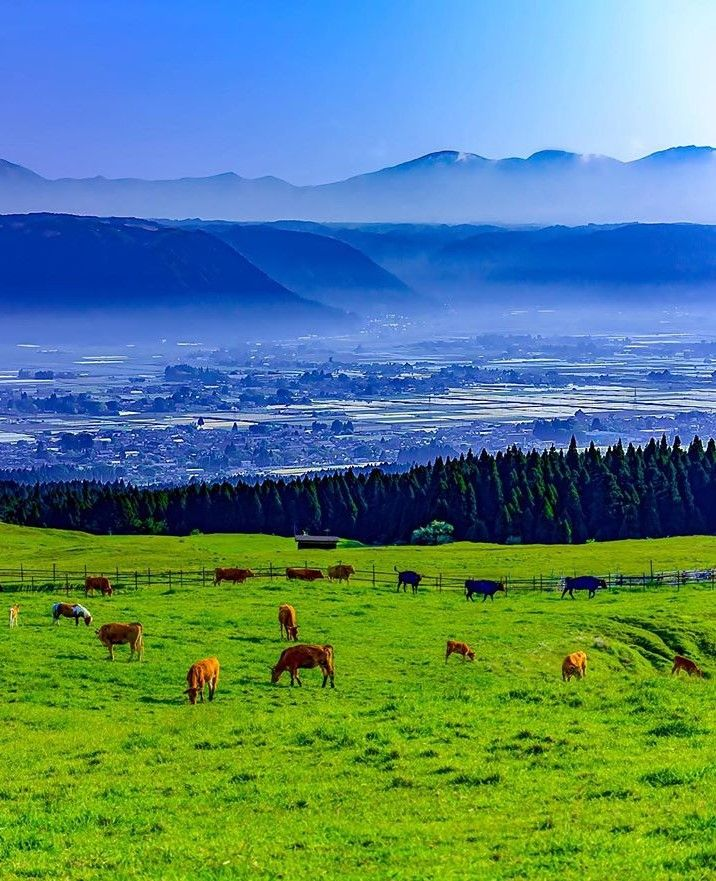 Kusasenri, Aso, Kumamoto, Japan, plateaus, horse, mountains
