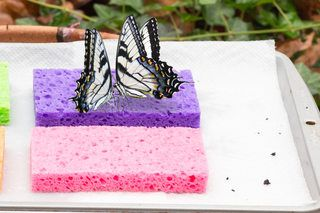 How to Make a Homemade Butterfly Feeder (with Pictures) | eHow