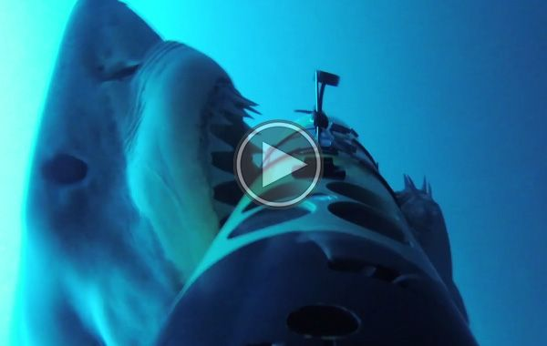 #Shark Cam Attack