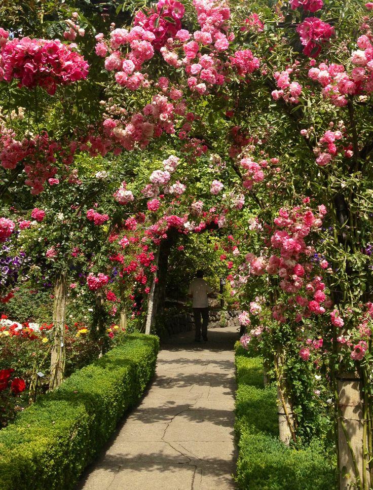 Roses In Garden: Rose Garden In June Butchart Gardens Victoria BC
