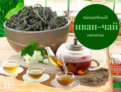 Ферментация иван-чая в домашних условиях   Блог Ирины Зайцевой