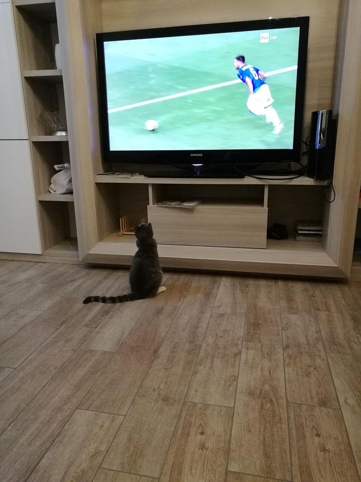 My cat is a football fan! #fun #funny #funny_memes #funny gif #funny_videos #funny_pictures #funny_photos
