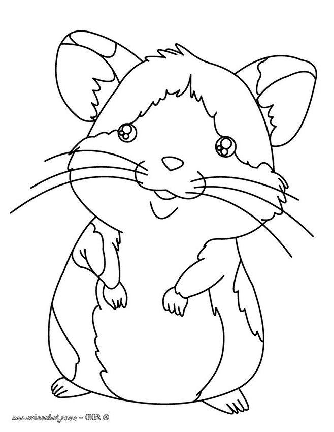 9 Primaire Coloriage Hamster Image Coloriage Animaux Coloriage Hamster Coloriage