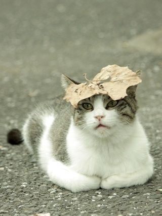 I have a natural hat #funnycats #catsfunny #funny #cats