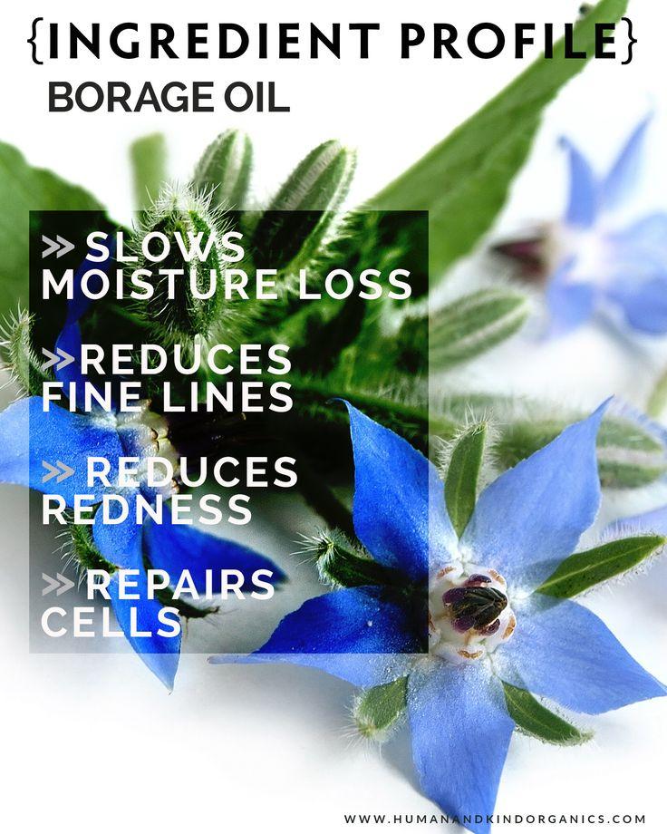 Borage Seed Oil {organic}