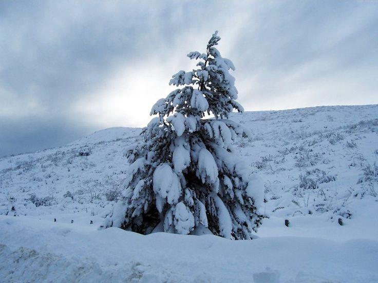 Χριστουγεννιάτικο δέντρο, χειμώνας, χιόνι διανυσματικό