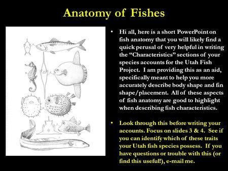 "Anatomy of Fishes Hi all, here is a short PowerPoint on fish anatomy that you will likely find a quick perusal of very helpful in writing the ""Characteristics"">"