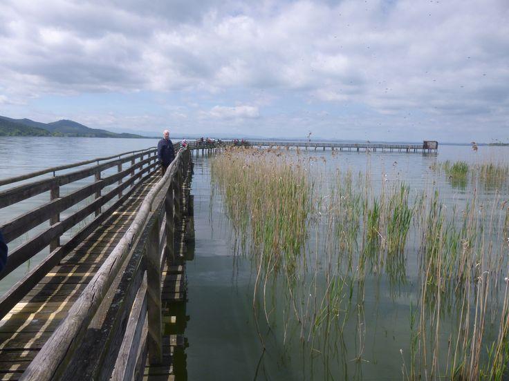 Oasi Naturalistica La Valle, Lago Trasimeno, Umbria, Italia