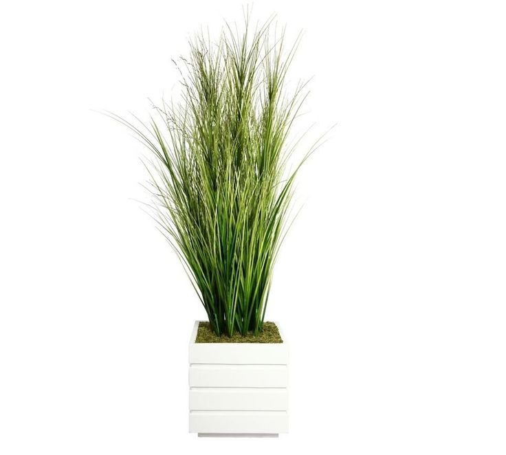 Laura ashley home tall onion grass in square fiberstone for Spiky ornamental grass